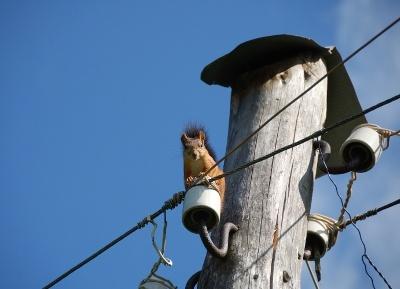 damage fiber networks