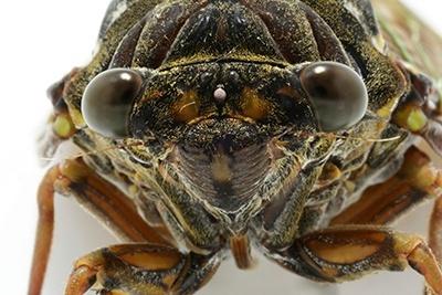 insect danger for fiber networks