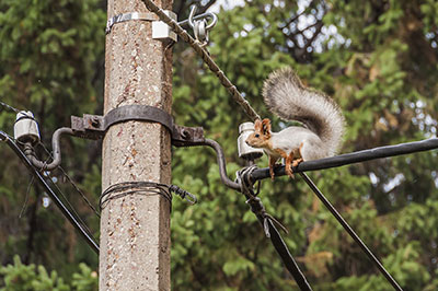 squirrel danger for fiber networks