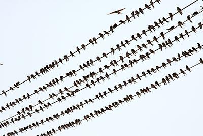 bird danger for fiber networks
